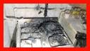 آتش سوزی یک باب منزل مسکونی در خیابان سعدی